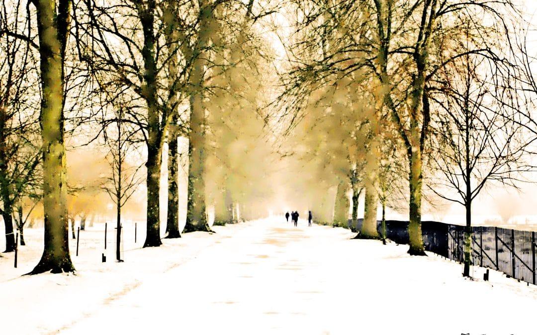 Die Wühlmaus